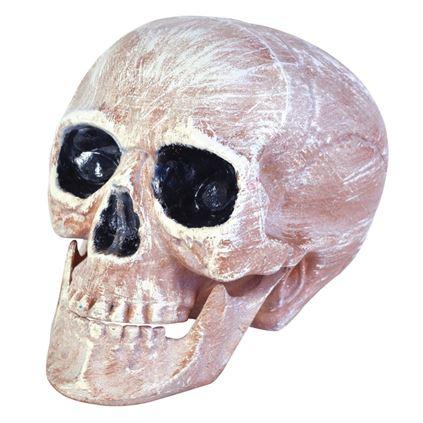 Decor Halloween Craniu